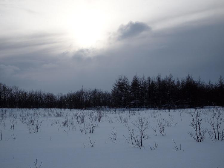 Зима. Прогулки с доберманом