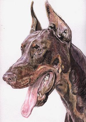 Польский художник Marcin Wojciechowski. Доберман - одна из любимых его пород. Он изображает собак с 1997